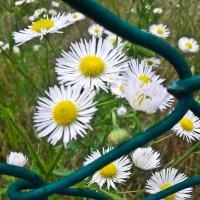Красота, спрятанная за зеленым забором :: Андрей ТOMА©