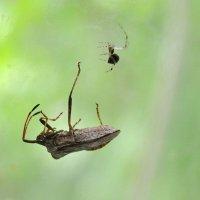 паук и клоп :: Бармалей ин юэй
