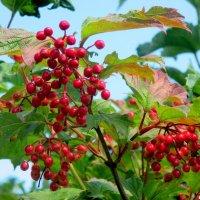 Лето красное прекрасное :: Нина Бутко