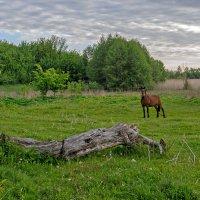 Утром на лугу :: Евгений Гайдук