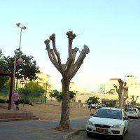 Дерево - скелет :: Герович Лилия