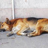 Сторож спит, служба идёт... :: Маргарита Батырева