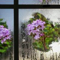 Опять цветёт весенний сад... :: Людмила Фил