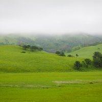 Зеленые просторы. :: Мила