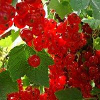 Смородины ягоды просто волшебные... :: Galina Dzubina