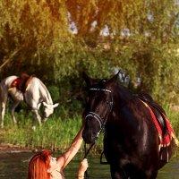 Фотопрогулка с лошадьми :: Светлана Белкина