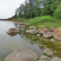 Берег Финского залива :: Светлана