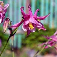 цветок с пампушками :: vg154