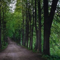Дорога в лес :: Александра Юдаева
