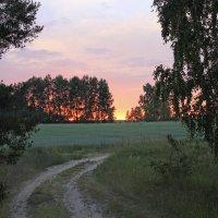 ржаной закат :: оксана