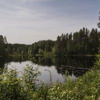 Лесное озеро. :: Марина Никулина