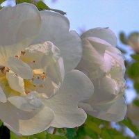 Боже мой, уже середина лета! :: Фотогруппа Весна.