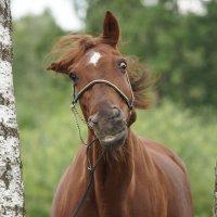 Лошади - самые фотогеничные, красивые и грациозные существа! :: Валерия заноска