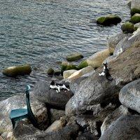 Морские котики Кинерета и синий стул :: Татьяна [Sumtime]