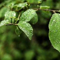 После дождя :: Василий Ахатов