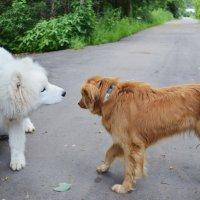 Джо тоже внимательно рассматривает Пчёлку. :: Татьяна Помогалова