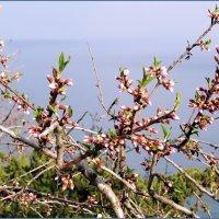 Весна в Алуште :: Ирина Лушагина