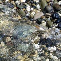 Морские камушки :: Татьяна Смоляниченко