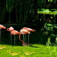 Фламинго :: Alexander Dementev