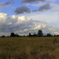 в поле :: оксана