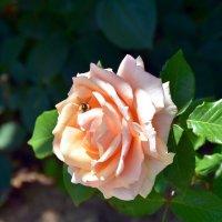 большой цветок.. много работы.. :: Валерия Шамсутдинова