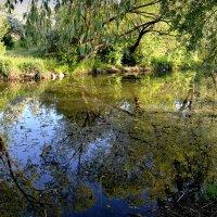 Деревья купаются в речке :: Валентина Данилова