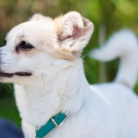 Собака на природе :: Valentina Zaytseva