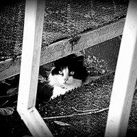 Кошка :: Marina Bernackaya Бернацкая