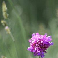 Из жизни полевых цветов. :: Paparazzi