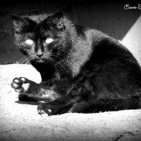 Чёрный кот :: Сашко Губаревич