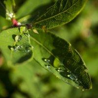 After the rain :: Яна Васильева