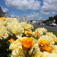 Городские цветы. :: ольга