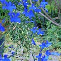 Синяя дымка в саду :: spm62 Baiakhcheva Svetlana