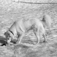 Снег и собака :: Дмитрий Никитин