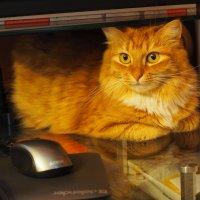 Кошка и мышка :: Odissey