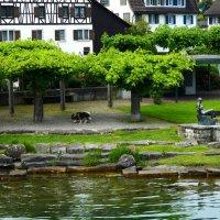 на Цюрихском озере :: Александр Корчемный