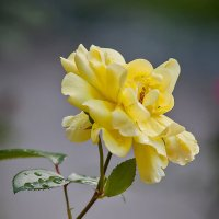 цветы :: Владимир Габов