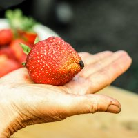 Немного про ягоды :: Микто (Mikto) Михаил Носков