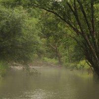 В глубине Уссурийской тайги горная речушка Муравейка. :: Марина Белоусова