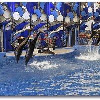 В дельфинарии... :: СветЛана D