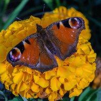 Украшение для цветка. :: Виктор Иванович