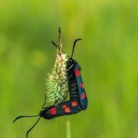 И у насекомых любовь, никак не могли расстаться, видать не могут друг без друга :: Владимир Деньгуб