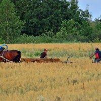 Через поле.. :: Юрий Анипов