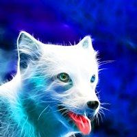 White Fox :: Andy Kloxx Foxtronic