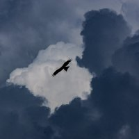 В небе синем :: Валерий Симонов