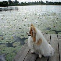 д. Озерки. Большое озеро. Смотрящий вдаль :: Елена Павлова (Смолова)