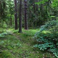 Лесной пейзаж :: Наталья