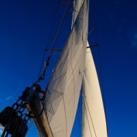 Белые паруса яхты на чисто синем фоне неба :: Ирина Виноградова
