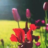 Солнечный цветок :: Ксения Трифонова