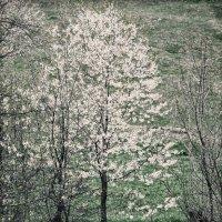 Весна :: Роман Савоцкий